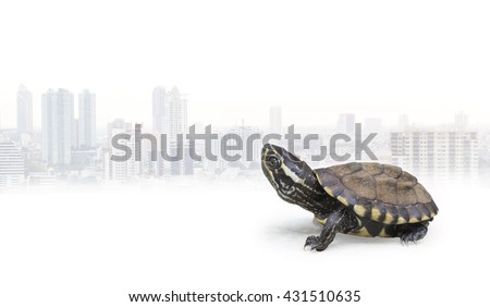 Turtle crawling awkwardly on a white background behind a large city / like competition. Doing nothing may be slow, but looking at other people succeed. - stock photo