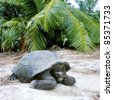 turtle, Curieuse, Seychelles - stock photo