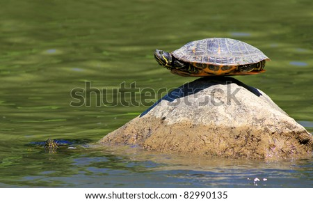 turtle doing yoga finding the ultimate sense of balance on the rock and the other one is watching - stock photo