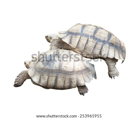 Turtle Farm Animals - stock photo