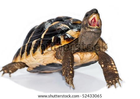 turtle hungry - stock photo