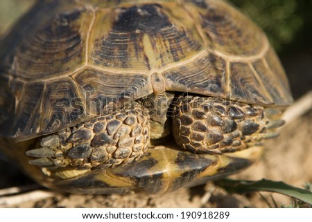 turtle in steppe - stock photo