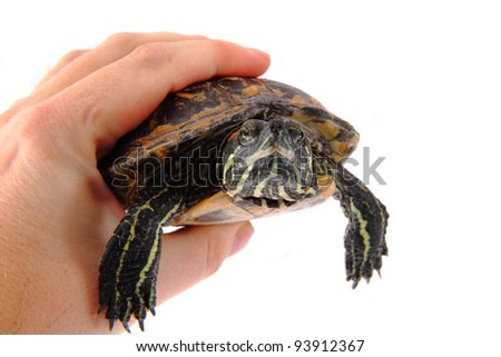 turtle in the hand - stock photo