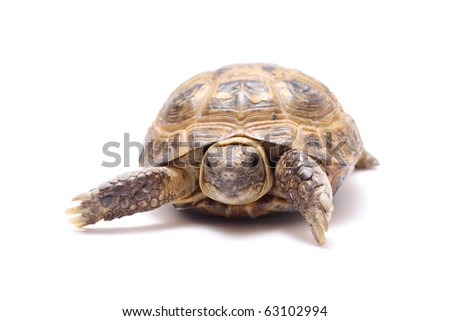 turtle land six years on a white background - stock photo