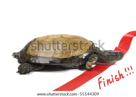Turtle leader finishes on a white background - stock photo