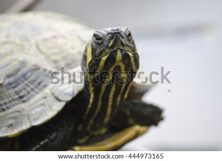 Turtle looking at you