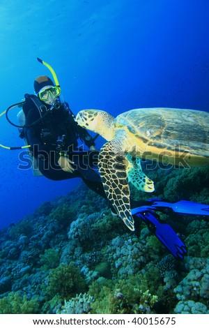 Turtle meets Scuba Diver - stock photo