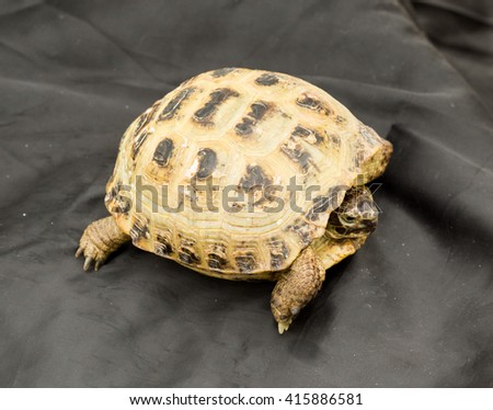 Turtle on a black background - stock photo