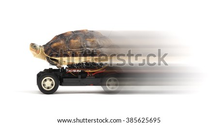 Turtle on a toy car in a speed over white background.  - stock photo