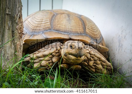 Turtle on grass - stock photo