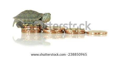 Turtle on money. Slowly concept - stock photo