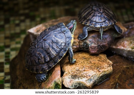 Turtle on the rocks - stock photo