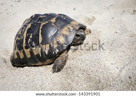 Turtle on the sand - stock photo