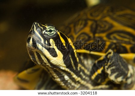 Turtle portrait - stock photo