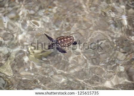 Turtle release - stock photo