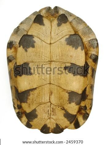 Turtle Shell Isolation - Bottom - stock photo