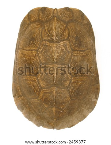 Turtle Shell isolation - top view - stock photo