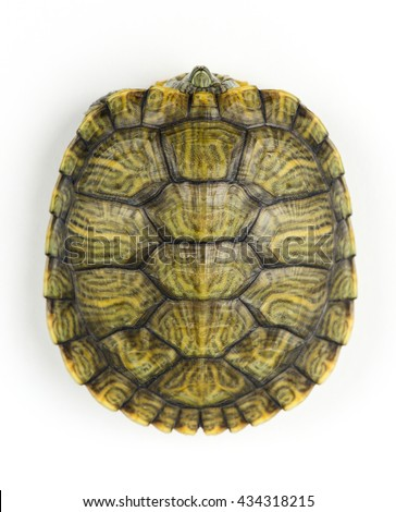 Turtle Shell Pattern Stock Images, Royalty-Free Images ...