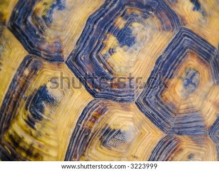 turtle shell texture - stock photo