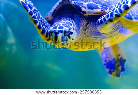 Turtle swimming - stock photo
