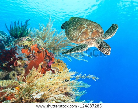 Turtle swimming underwater among the coral reef - stock photo