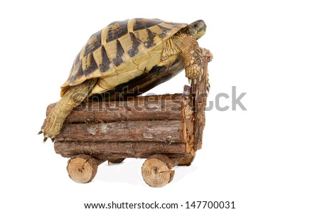 Turtle tortoise rides wooden cart vehicle - stock photo