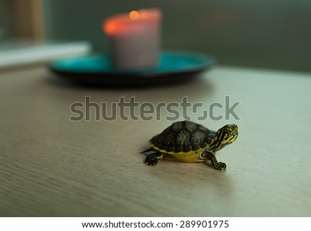 Turtle walking next to candle flame - stock photo