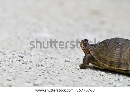 turtle with fly on nose - stock photo