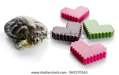 Turtle with plastic hearts isolated on white background - stock photo