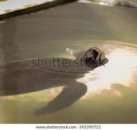 Turtles - stock photo