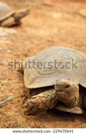 Turtles crawling in the nature - stock photo