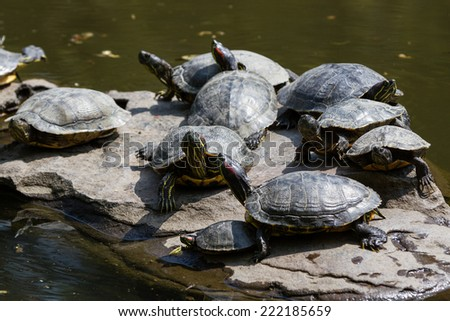 turtles in a pond at a park in japan, tokyo - stock photo
