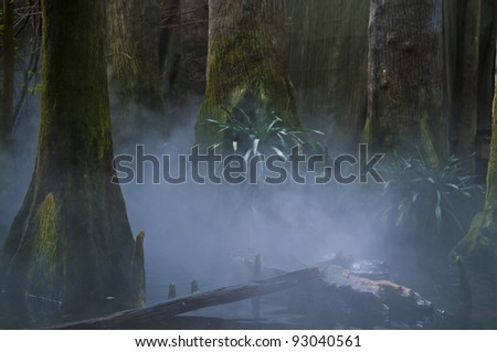 Turtles in Foggy misty morning in exotic swamps - stock photo