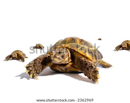Turtles on a white background - stock photo