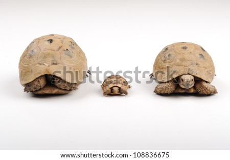 Turtles on a white backround - stock photo