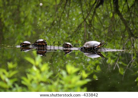 Turtles on Parade - stock photo