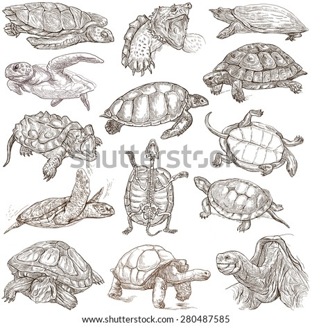 TURTLES (Tortoises) - Collection of an hand drawn illustrations. Description - Full sized hand drawn illustrations. Freehand sketches, drawing on white background. - stock photo