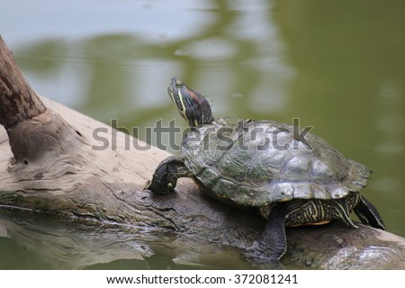 turtles ,Turtles on the tree,beautiful turtles - stock photo