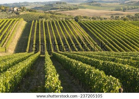 Tusca hills, Italy - stock photo