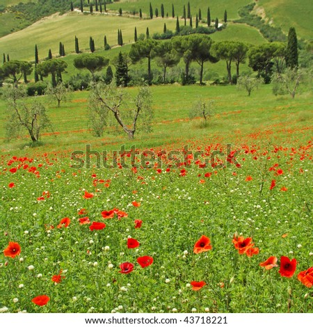 Tuscan idyll in spring,  Val d'Orcia UNESCO list, Italy - stock photo