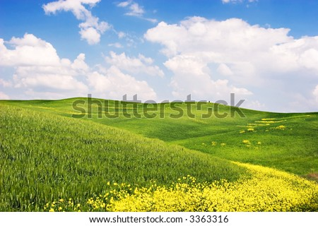 Tuscan Landscape : Green field with yellow flowers, blue sky and big white fluffy clouds. Tuscany, Italy