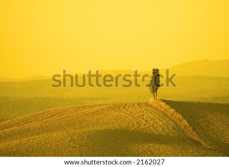 tuscan landscape in yellow sunset light - stock photo