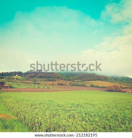 Tuscan Landscape with Vineyards and Olive Groves, Instagram Effect