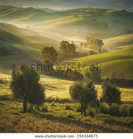 Tuscan olive trees and fields in the area of Siena, Italy - stock photo