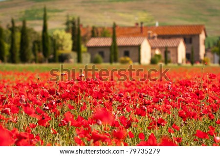 tuscan scene - stock photo