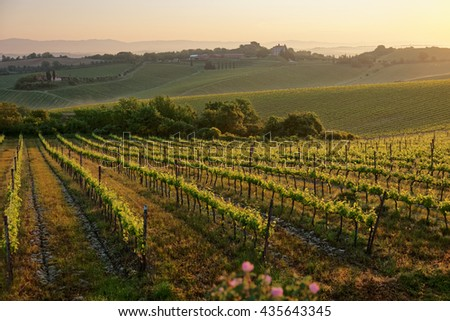 Tuscan vineyard at sunrise, first rays of golden light - stock photo