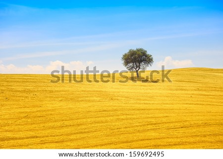 Tuscany country landscape, olive tree and green fields. Montalcino, Italy, Europe. - stock photo