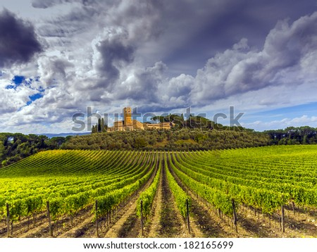 Tuscany countryside covered in vineyards - stock photo