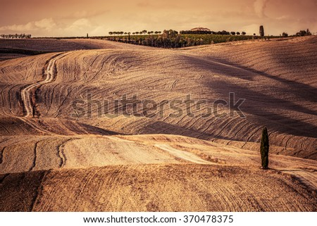 Tuscany fields autumn landscape, Italy. Harvest season makes the countryside hills and valleys nostalgic and picturesque. Lonely cypress tree and ground road - stock photo