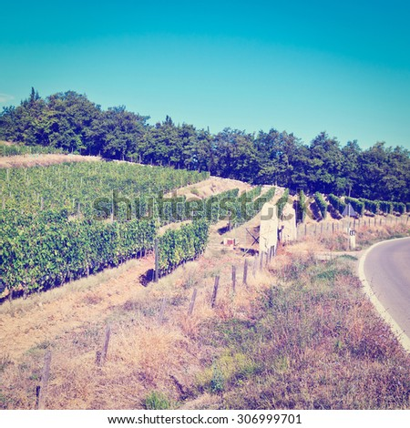 Tuscany Landscape with Asphalt Road near the Vineyard in Italy, Instagram Effect